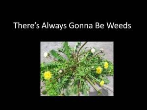 There's Always Gonna Be Weeds