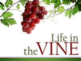 Life in the Vine