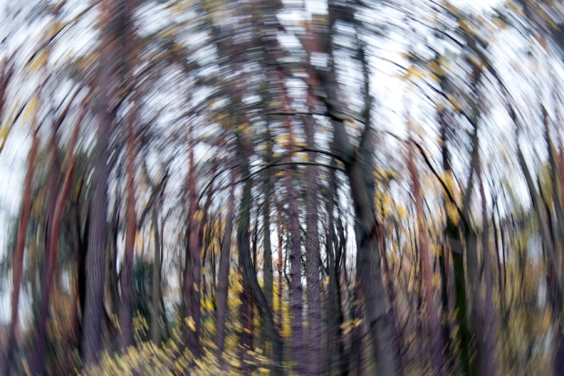 Forest, abstract, motion blur